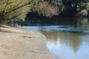 Dogs at Waikato River