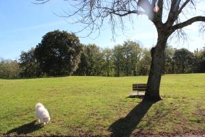 Sunshine at Days park